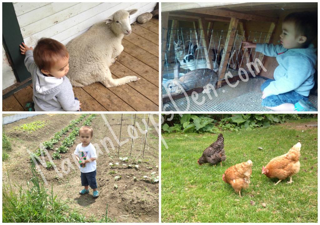 Farm Cub