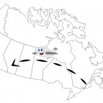 moving to Calgary