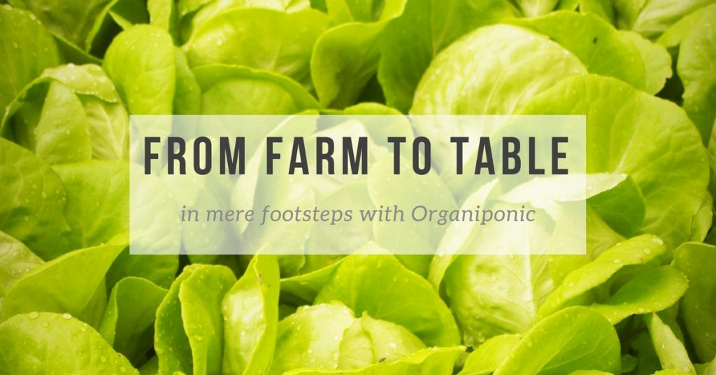 Organiponic: Farm to Table Just Got a Whole Lot More Local