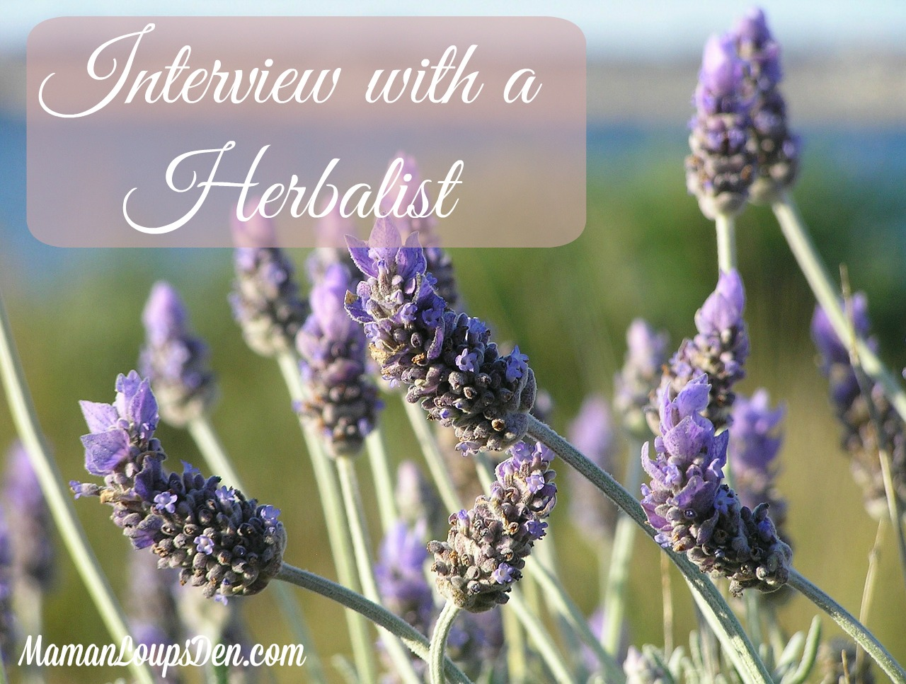 Interview with a Herbalist: Ever wondered what a makes someone a Herbalist? Meet Joanne from Honey Pot Herbals and find out!