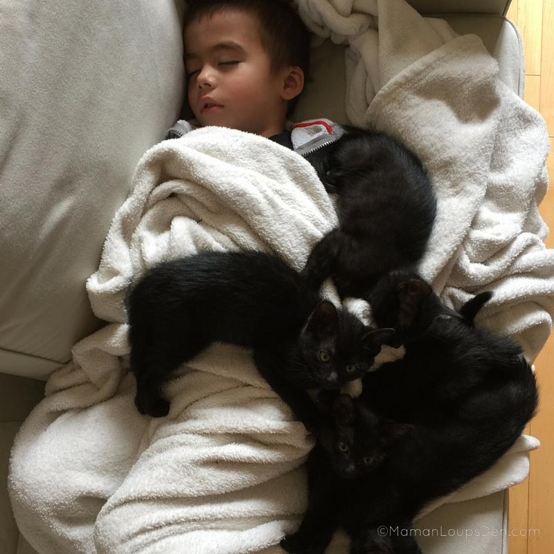 Cub and Kittens