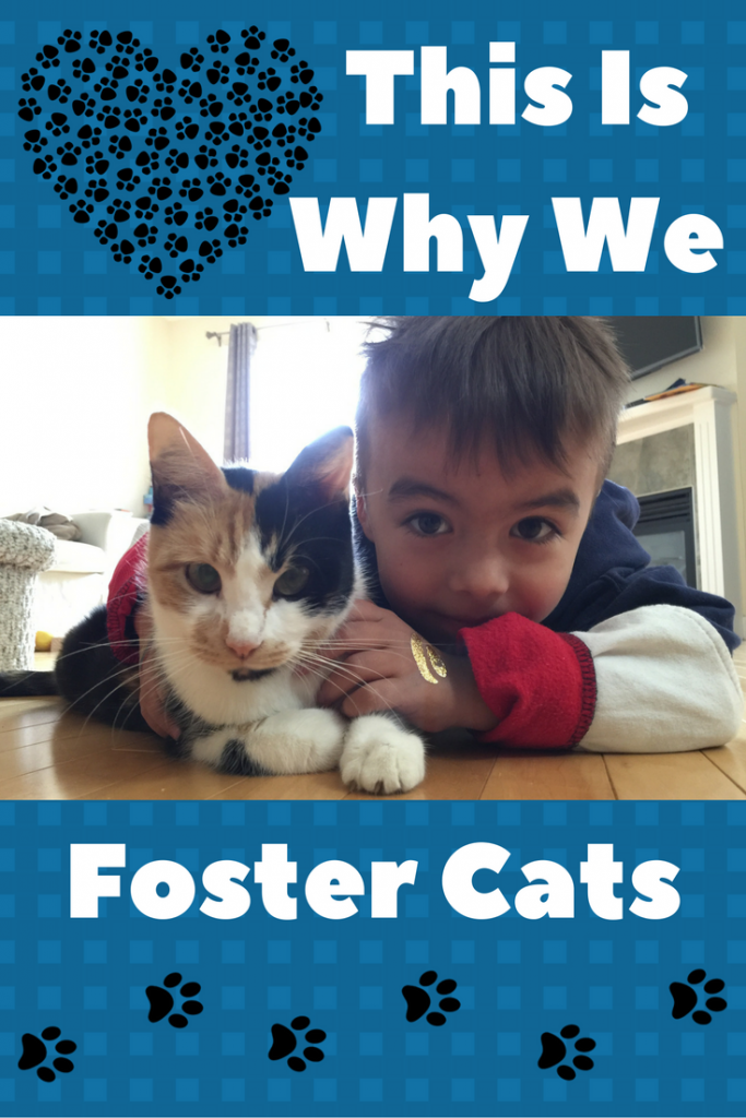This is Why We Foster Cats ~ Meow Foundation, Calgary